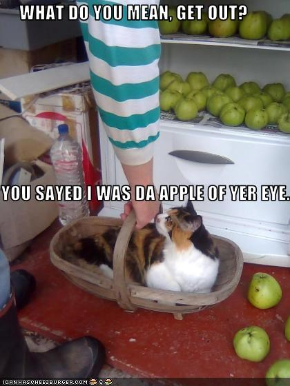 apples,aww,cute,cyoot kitteh of teh day,fridge,kitten,outside
