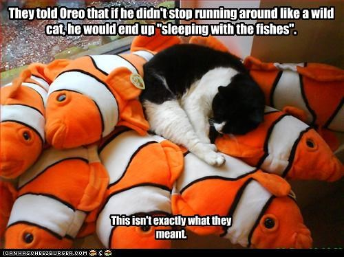 """They told Oreo that if he didn't stop running around like a wild cat, he would end up """"sleeping with the fishes"""". This isn't exactly what they meant."""
