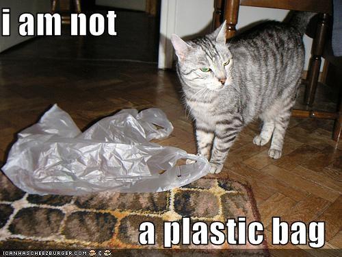 i am not a plastic bag - Cheezburger - Funny Memes | Funny
