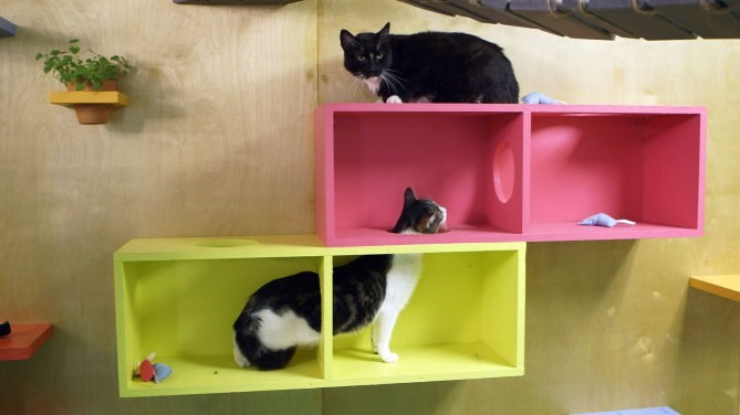 a story about a animal pet shelter getting a very pretty cool renovation