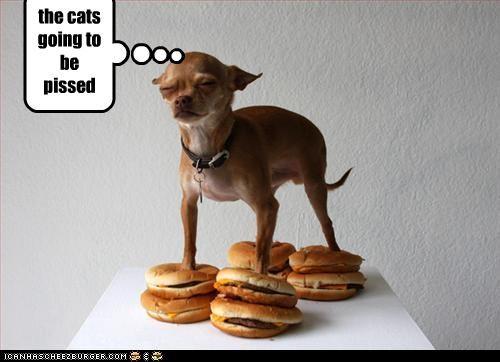 Cheezburger Image 3280053504