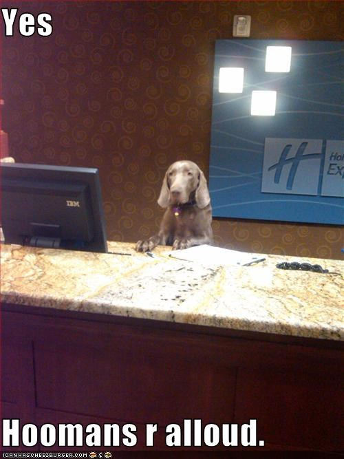 check in,hotel,plott hound