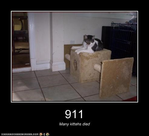 911 Many kittehs died