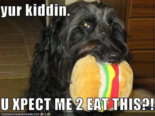 Cheezburger Image 3280538368