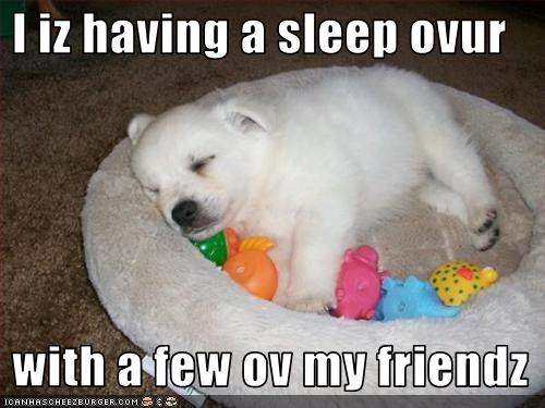 akita,bed,puppy,sleep,toys