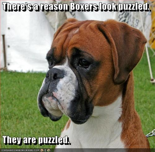 boxer confused - 3280696576