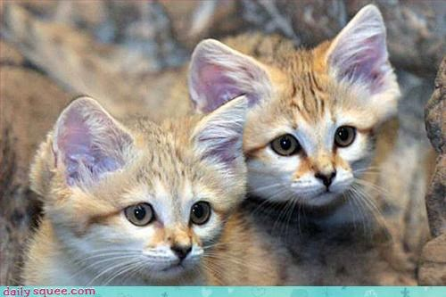cat kitten sand cats - 3281496064