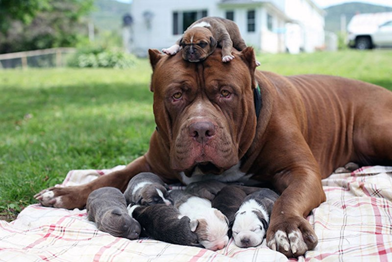 dog moms showing their new puppies