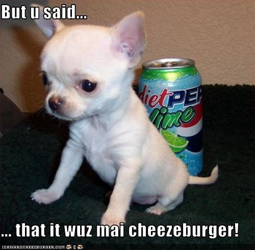 Cheezburger Image 3282401280