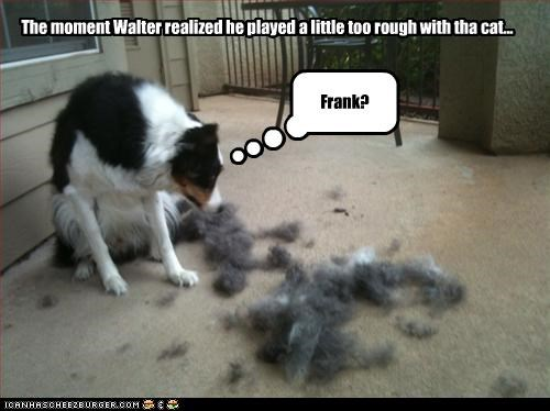 border collie,cat,epiphany,Hall of Fame,mistake,mixed breed,moment,playing,realization,rough,too hard,whoops