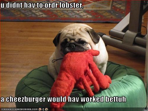 Cheezburger Image 3282828032