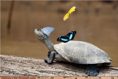 butterfly spring turtle