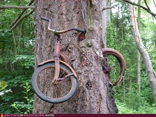 art bike bikes nature trees wtf - 3283223552