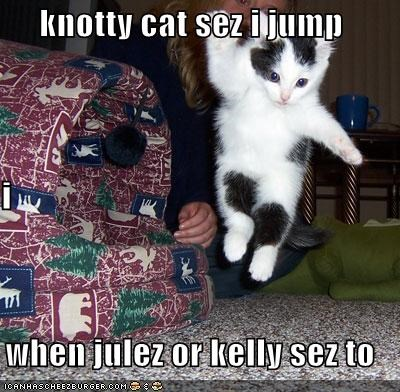 Knotty Cat Sez I Jump I When Julez Or Kelly Sez To Cheezburger