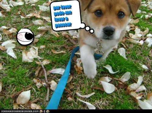 Cheezburger Image 3284429056