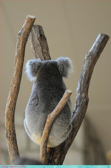 bear koala noms - 3284669696