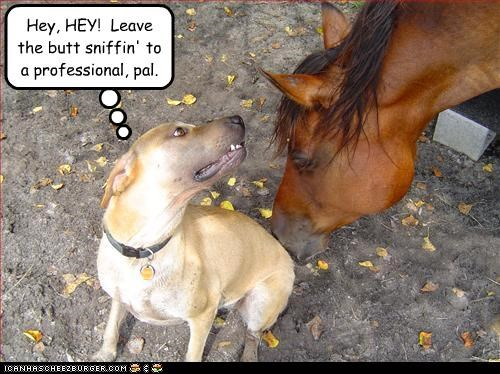 butt horse professional sniffing whatbreed - 3286161920