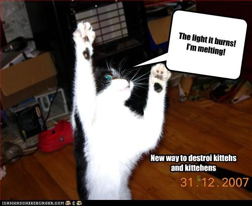 Cleverness Here The light it burns! I'm melting! New way to destroi kittehs and kittehens