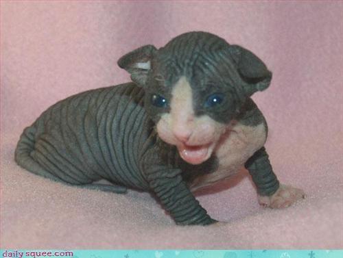 cute kitten so tiny tinycute - 3287771392