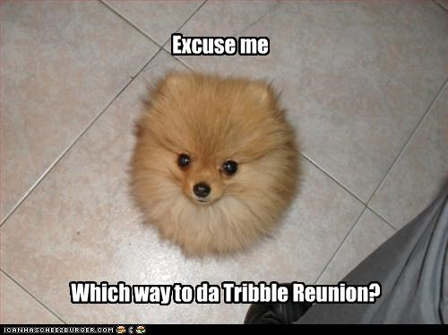 directions,pomeranian,reunion,Star Trek,tribble