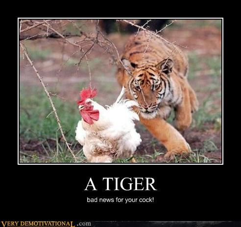 demotivational hilarious no no tube part Sad tiger