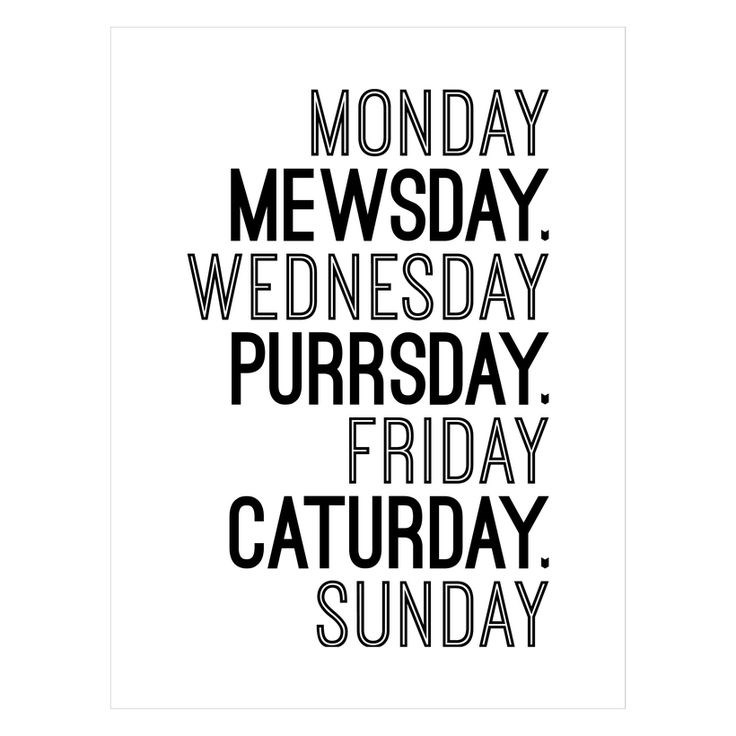 days of the week according to your cat