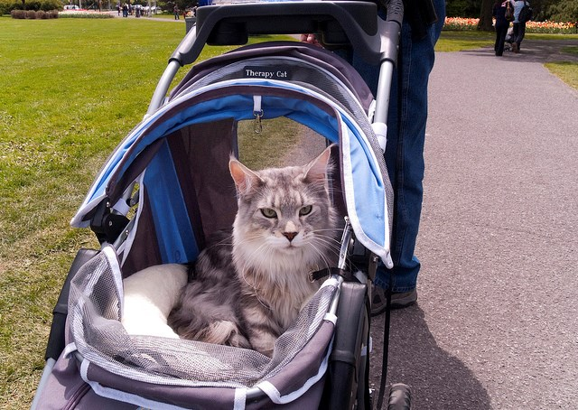 signs that you treat your cat like baby