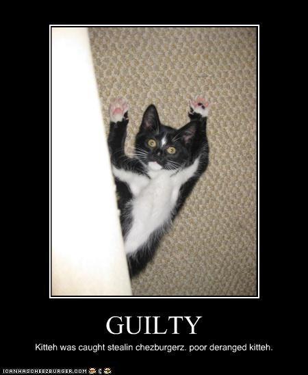 GUILTY Kitteh was caught stealin chezburgerz. poor deranged kitteh.