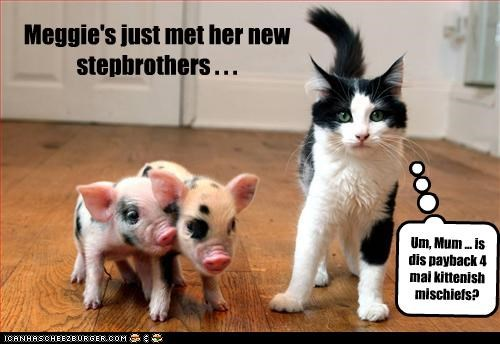 Meggie's just met her new stepbrothers . . . Um, Mum ... is dis payback 4 mai kittenish mischiefs?