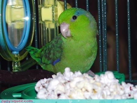bird noms parrot - 3290853120