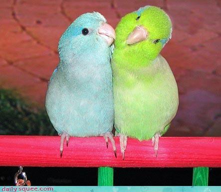 bird cute Pastel - 3290856704