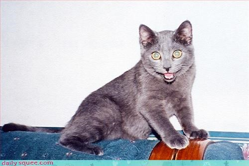 cute grey happy cat - 3291498752