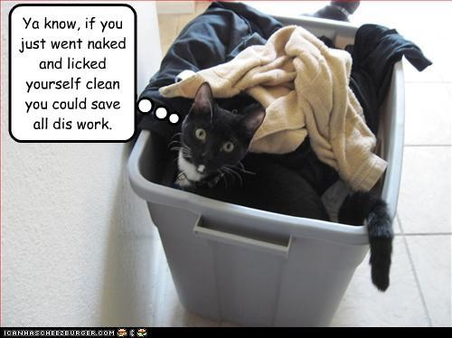 confused laundry - 3292398848