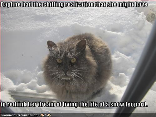 do not want snow snow leopard - 3293935616