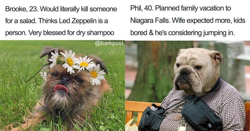 Funny dog bio memes.