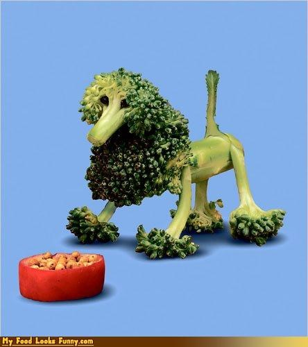 broccoli,dogs,fruits-veggies,poodle,tomato