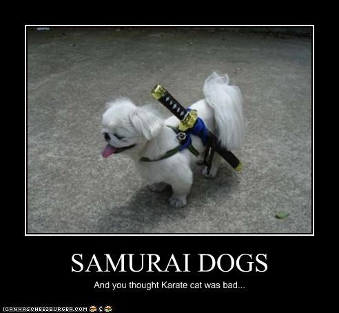 SAMURAI DOGS And you thought Karate cat was bad...