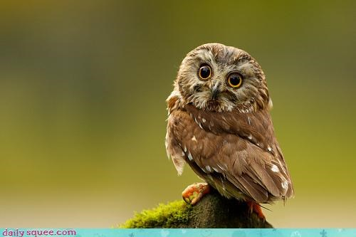 bird,Owl,so tiny