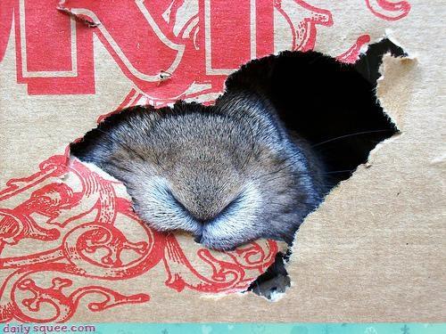 bunny nom rabbit - 3296405504