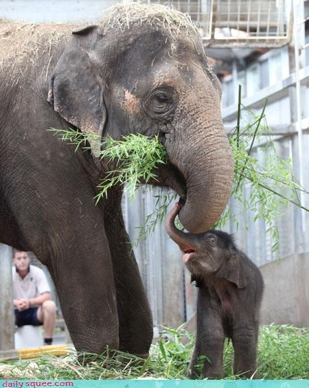baby,elephant,noms