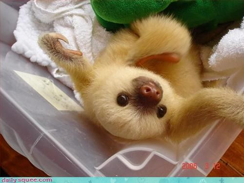 baby cute sloth - 3296792064