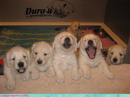 face puppy sing - 3297464064
