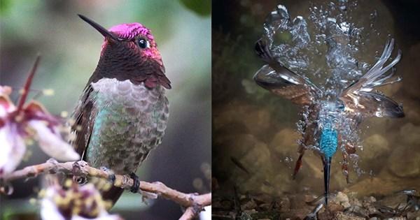 ganadores fotos aves
