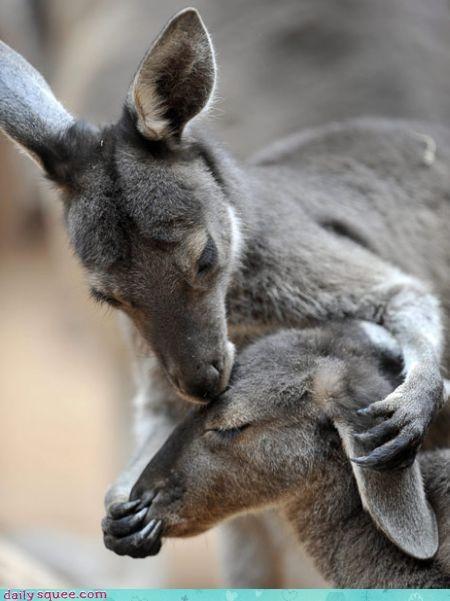 baby Joey kangaroo - 3298551040