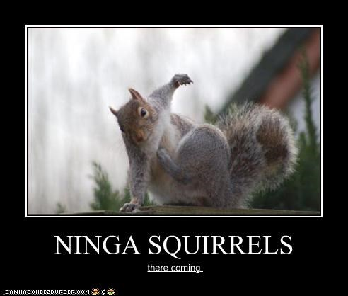 NINGA SQUIRRELS there coming
