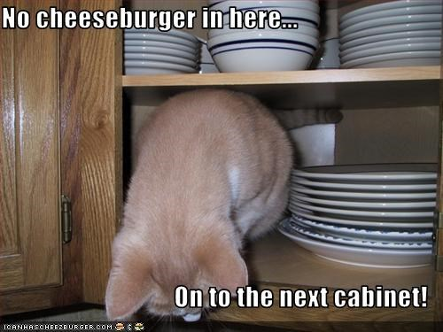 Cheezburger Image 3299577344