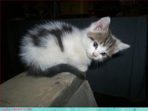 cat cute kitten - 3301685760