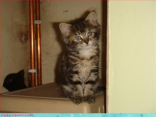 blogger regret cat kitten - 3302345728