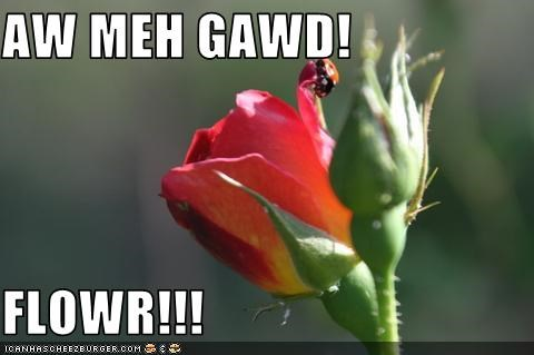 AW MEH GAWD!  FLOWR!!!