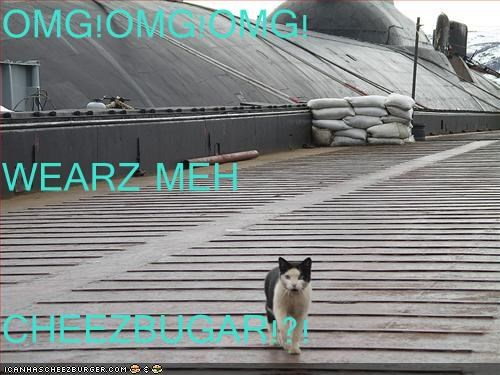Cheezburger Image 3302991616